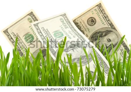 dollars in the green grass - stock photo