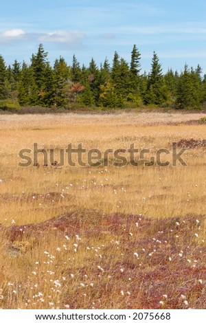 Dolly Sods, Monongahela National Forest, West Virginia, USA