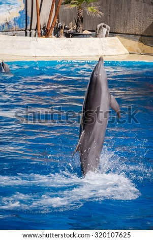 Dolphin adult jumping and playing in the water, Delphinidae