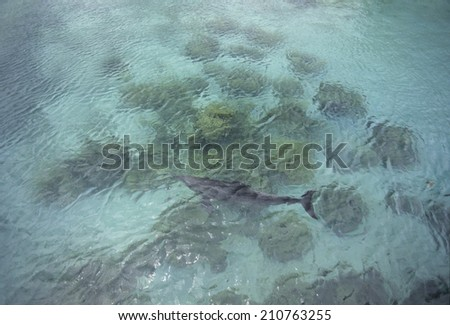 Dolphin By Reefs - stock photo