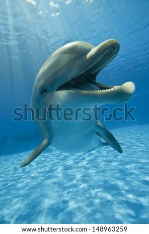 dolphin close up  - stock photo