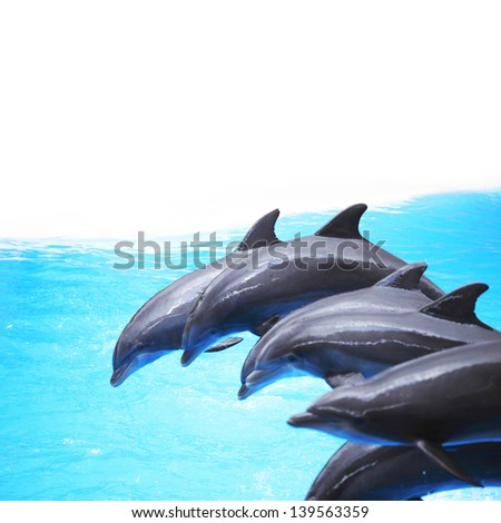Dolphin dancing during dolphins show - stock photo