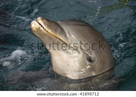 Dolphin face, smiling