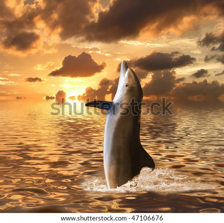 dolphin floating at ocean - stock photo