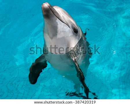 dolphin in blue water - stock photo