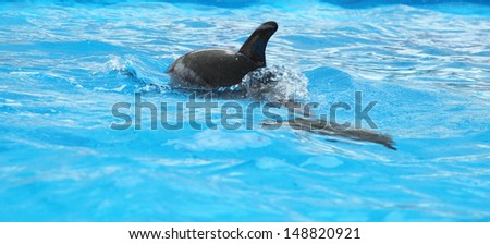 Dolphin in the clear water - stock photo