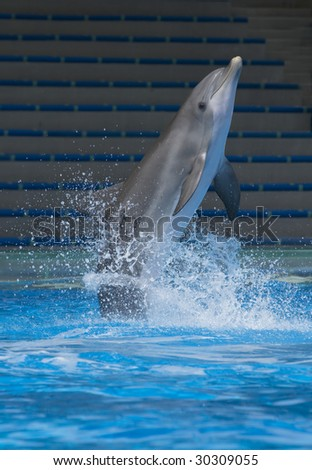 Dolphin jump out of the water - stock photo