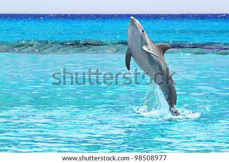 Dolphin jumping in the Caribbean Sea of Mexico