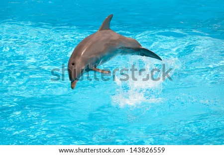 Dolphin jumping in the pool during acrobatic show - stock photo