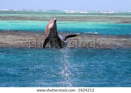 dolphin jumping over a turquoise lagoon