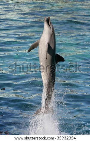 Dolphin jumping straight up out of blue water - stock photo