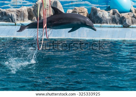 Dolphin jumping through a ring above turquoise water - stock photo