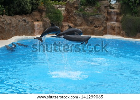 Dolphin jumping together - stock photo