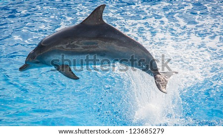 Dolphin jumps out from water - stock photo