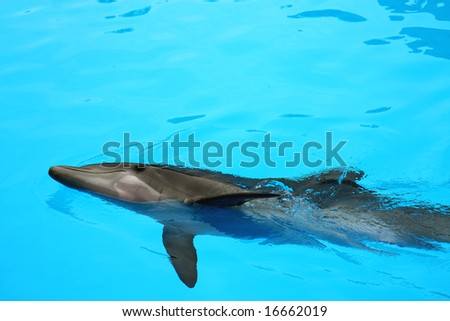 Dolphin liyng in the water