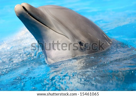 dolphin looking out of the water - stock photo