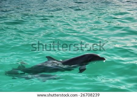 Dolphin Mother