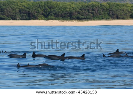 Dolphin Party - stock photo