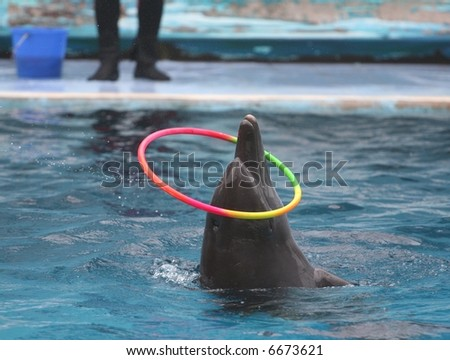 Dolphin Playing Hula Hoop - stock photo