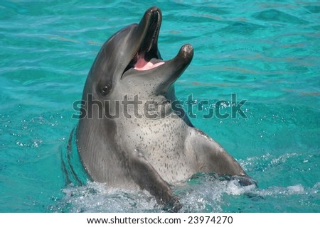 Dolphin playing in clear blue water - stock photo