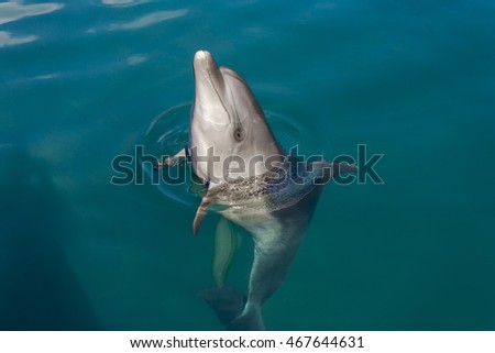 Dolphin playing in the blue water sea