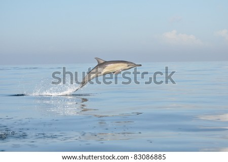 dolphin playing in the sunshine - stock photo