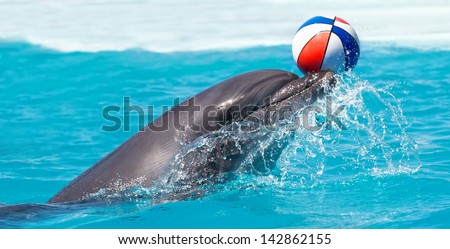 Dolphin playing with a ball - stock photo