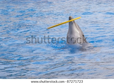 Dolphin playing with a hula hoop - stock photo