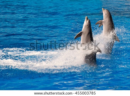 Dolphin show in Barcelona. Two dolphins close up