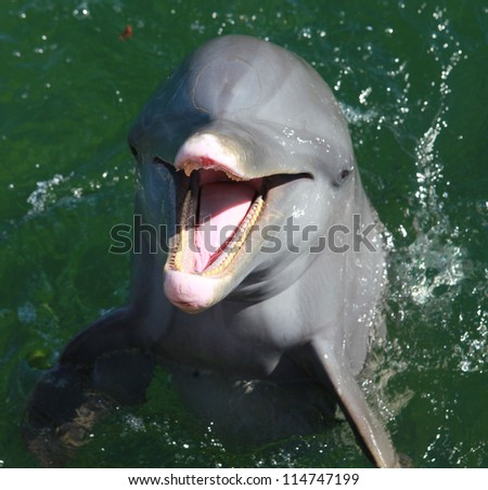 dolphin smiling - stock photo