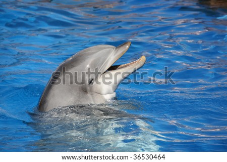 dolphin smiling in a blue water pool - stock photo