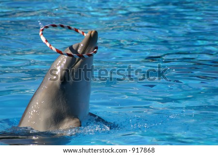 dolphin spinning a ring around its snout - stock photo