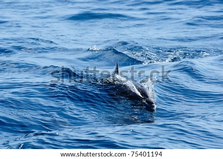 Dolphin swimming in a sea
