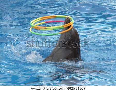 dolphin turns three color hoops