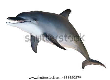 dolphin white sreen - stock photo