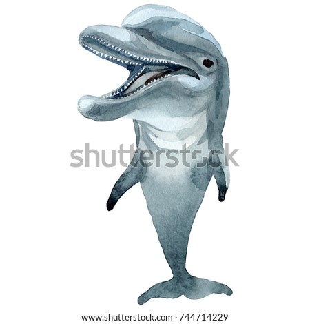 the background of mammalian dolphins Sickness and death can plague marine mammals at parks  the dolphin,  estimated to be 22, had a history of liver problems and suffered a.