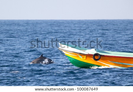 dolphine jump in Sri Lanka - stock photo