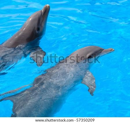 dolphins - stock photo