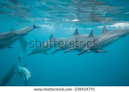 Dolphins all in a line - stock photo