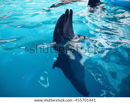 dolphins, azure water - stock photo