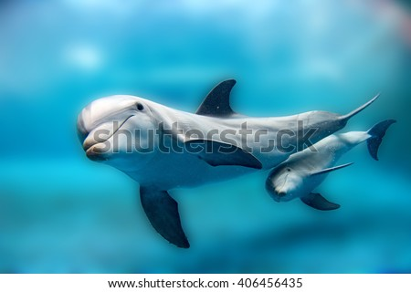 Dolphins Close to you while swimming in the deep blue sea  - stock photo
