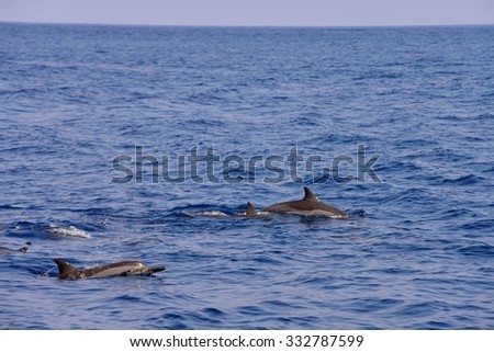 dolphins during a jump ( flight)