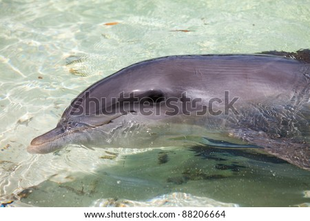 dolphins float in sea water ... - stock photo