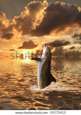 dolphins floating at ocean - stock photo