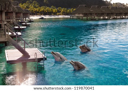 Dolphins in a bay of the tropical island, near houses on piles - stock photo