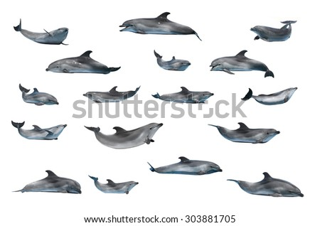 dolphins isolated on a white background - stock photo