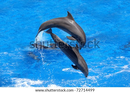 Dolphins jumping - stock photo