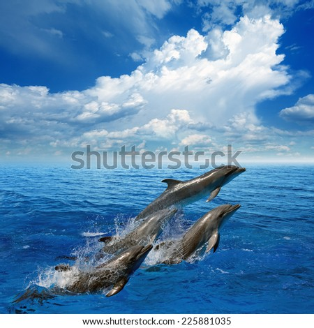 Dolphins jumping in clear blue sea, white clouds in sky - stock photo