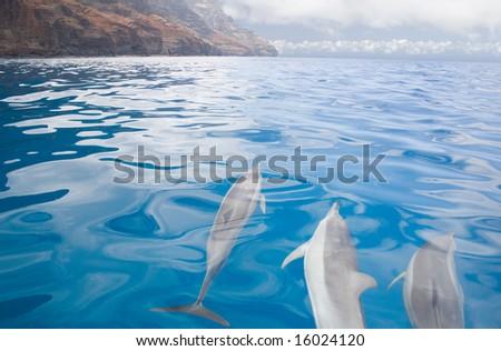 Dolphins off Napali Coast (Stenella longirostris) - stock photo