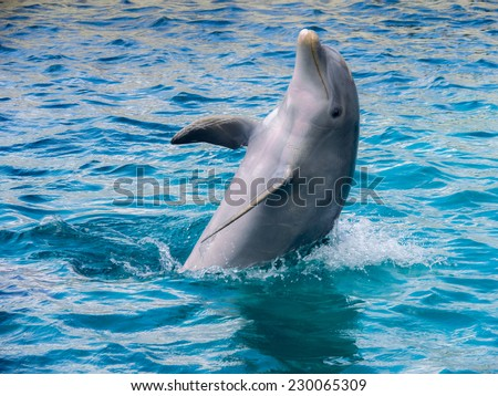 Dolphins on Curacao a tropical island in the Caribbean - stock photo